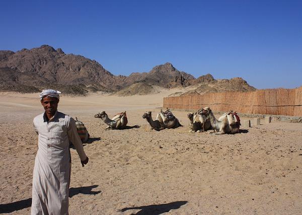 Kameleita autiomaan laidalla Hurghadassa.