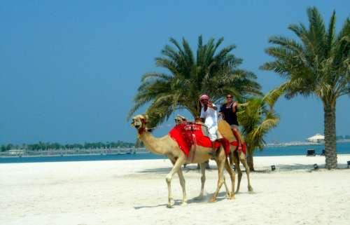Kamelin selässä Abu Dhabissa.