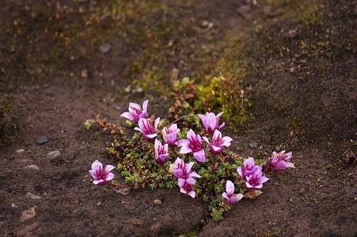 Huippuvuoret, luonto. Kuva: Kitty Terwolbeck, Flickr.com.