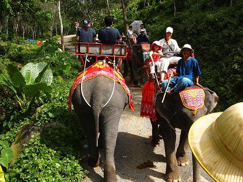 Elefanttisafarilla Phuketissa.