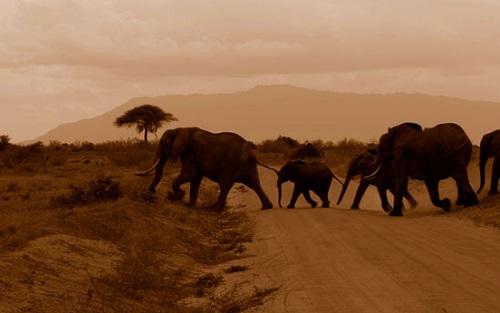 elephants-331284652221nG5P