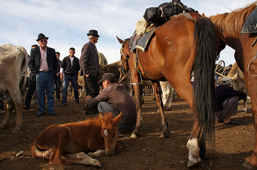 Kirgisia, hevosia