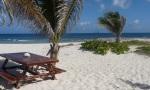 anguilla-alljengi
