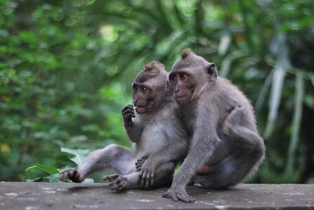 Sacred Monkey Forest , Ubud , Bali