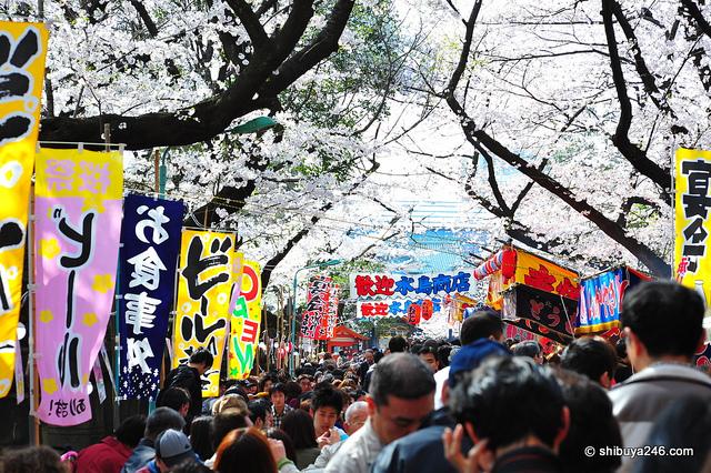 ueno-shibuya246
